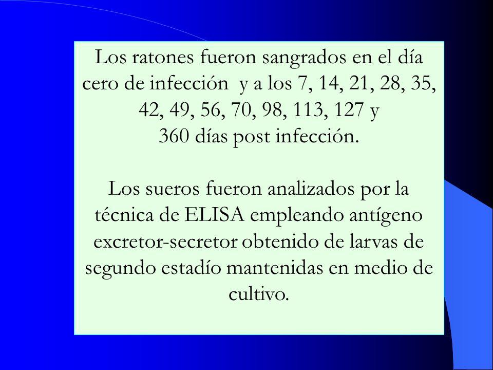 Los ratones fueron sangrados en el día cero de infección y a los 7, 14, 21, 28, 35, 42, 49, 56, 70, 98, 113, 127 y