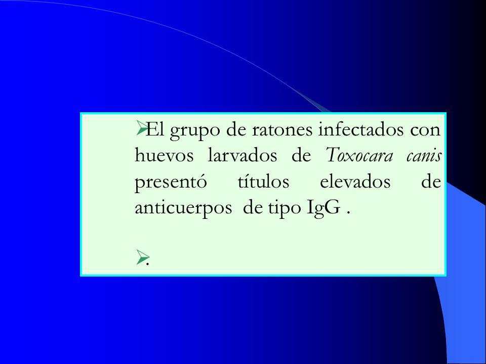 El grupo de ratones infectados con huevos larvados de Toxocara canis presentó títulos elevados de anticuerpos de tipo IgG .