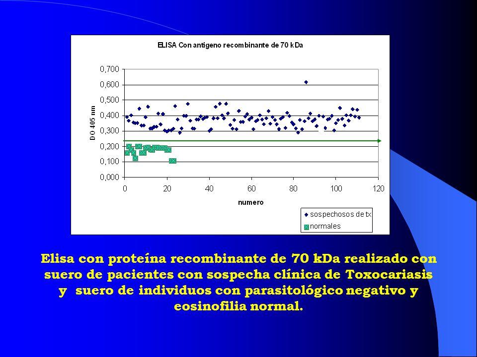 Elisa con proteína recombinante de 70 kDa realizado con suero de pacientes con sospecha clínica de Toxocariasis y suero de individuos con parasitológico negativo y eosinofilia normal.