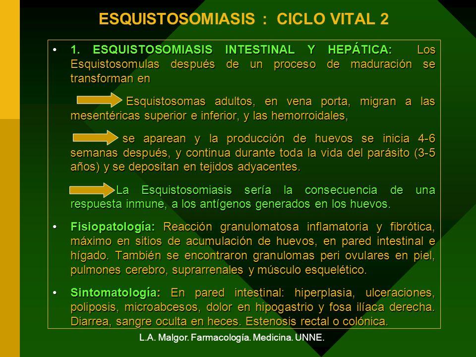 ESQUISTOSOMIASIS : CICLO VITAL 2