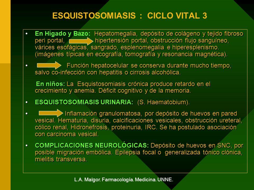 ESQUISTOSOMIASIS : CICLO VITAL 3