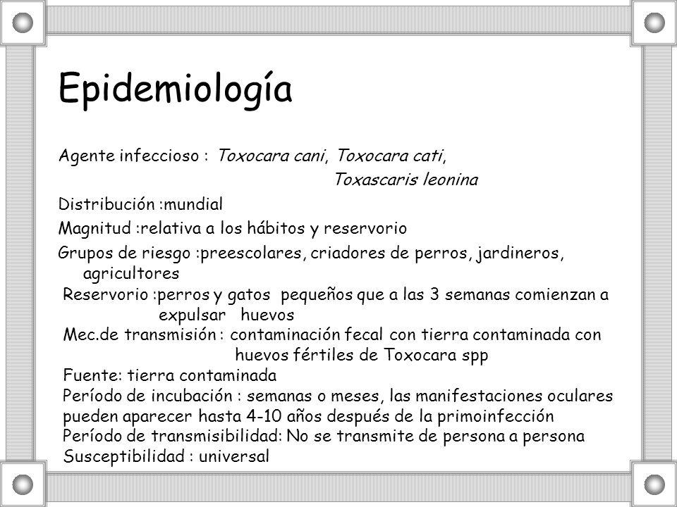 Epidemiología Agente infeccioso : Toxocara cani, Toxocara cati,