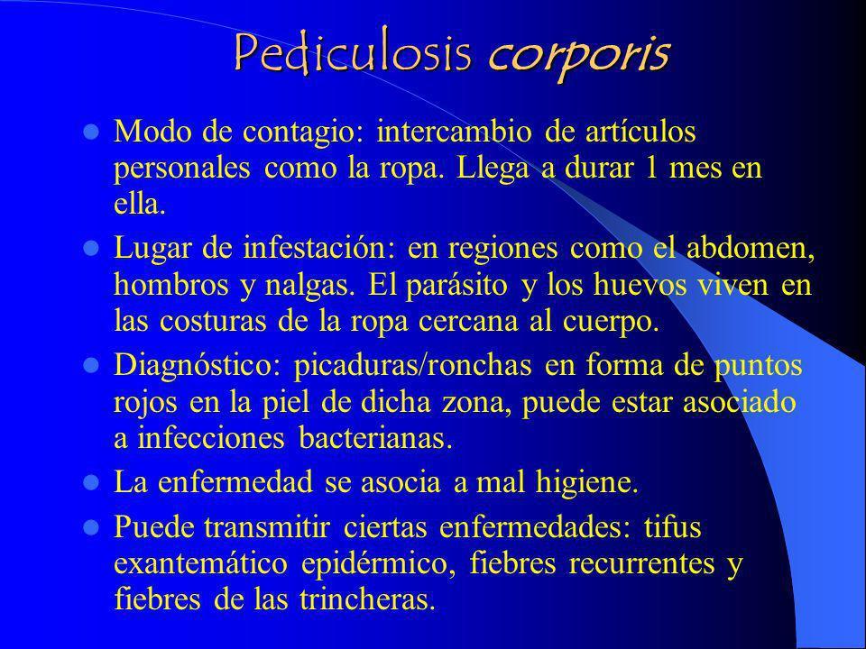 Pediculosis corporis Modo de contagio: intercambio de artículos personales como la ropa. Llega a durar 1 mes en ella.