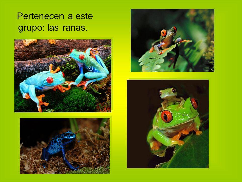 Pertenecen a este grupo: las ranas.