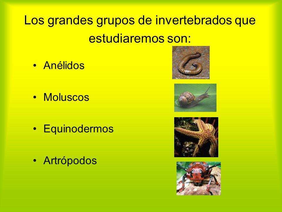 Los grandes grupos de invertebrados que estudiaremos son: