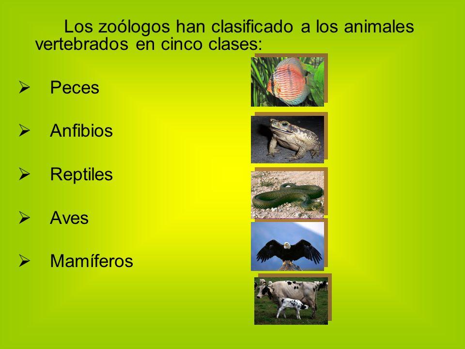 Los zoólogos han clasificado a los animales vertebrados en cinco clases: