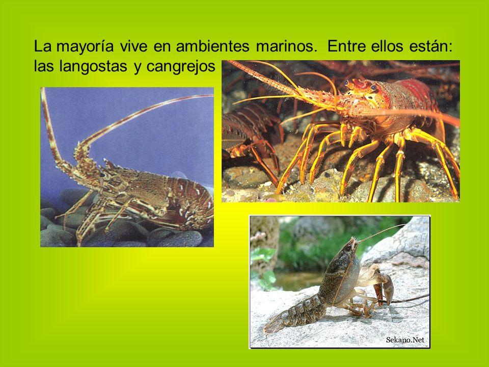 La mayoría vive en ambientes marinos