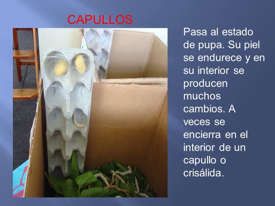 CAPULLOS