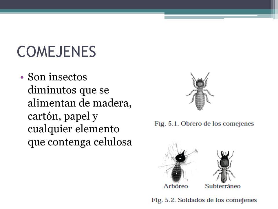 COMEJENES Son insectos diminutos que se alimentan de madera, cartón, papel y cualquier elemento que contenga celulosa.