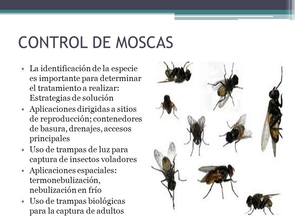 CONTROL DE MOSCAS La identificación de la especie es importante para determinar el tratamiento a realizar: Estrategias de solución.