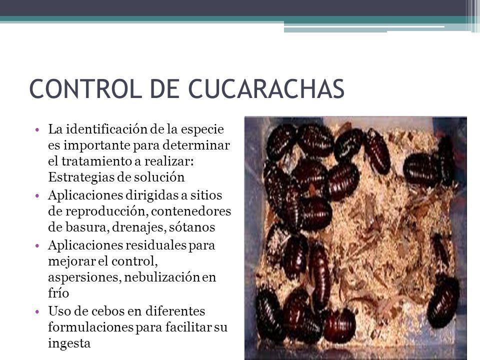 CONTROL DE CUCARACHAS La identificación de la especie es importante para determinar el tratamiento a realizar: Estrategias de solución.