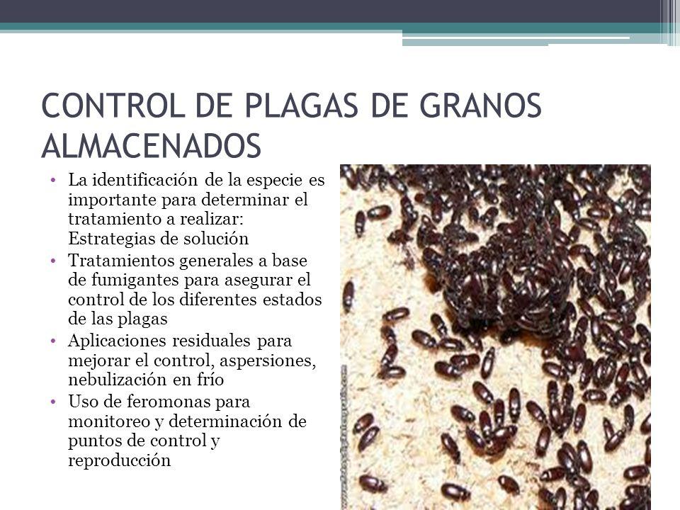 CONTROL DE PLAGAS DE GRANOS ALMACENADOS