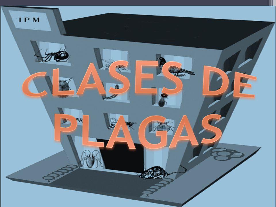 CLASES DE PLAGAS