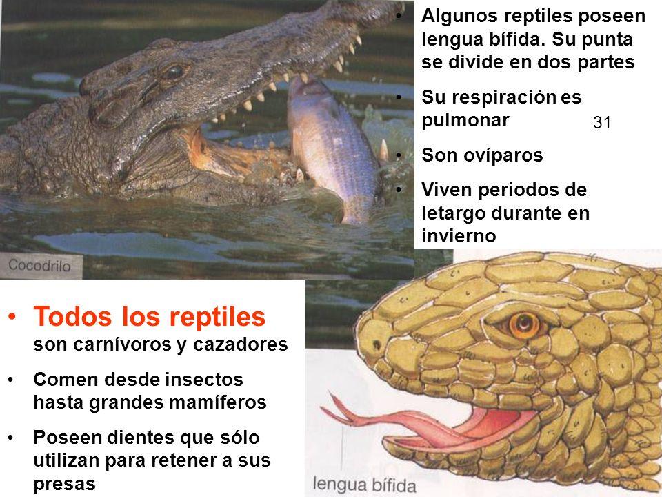 Todos los reptiles son carnívoros y cazadores