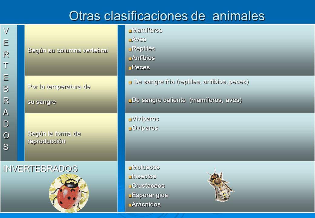 Otras clasificaciones de animales