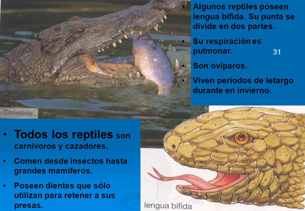 Todos los reptiles son carnívoros y cazadores.