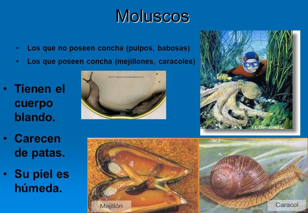 Moluscos Tienen el cuerpo blando. Carecen de patas. Su piel es húmeda.