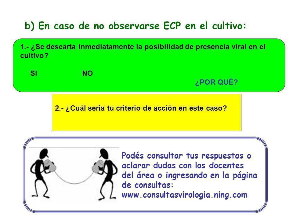 b) En caso de no observarse ECP en el cultivo: