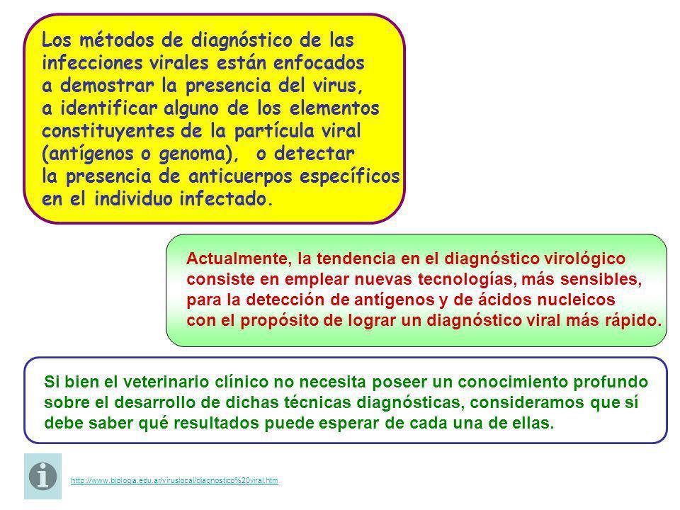 Los métodos de diagnóstico de las infecciones virales están enfocados