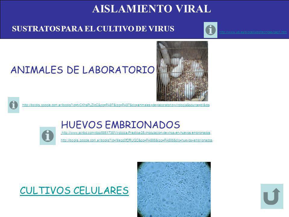 AISLAMIENTO VIRAL ANIMALES DE LABORATORIO HUEVOS EMBRIONADOS