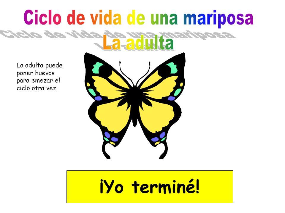 Ciclo de vida de una mariposa