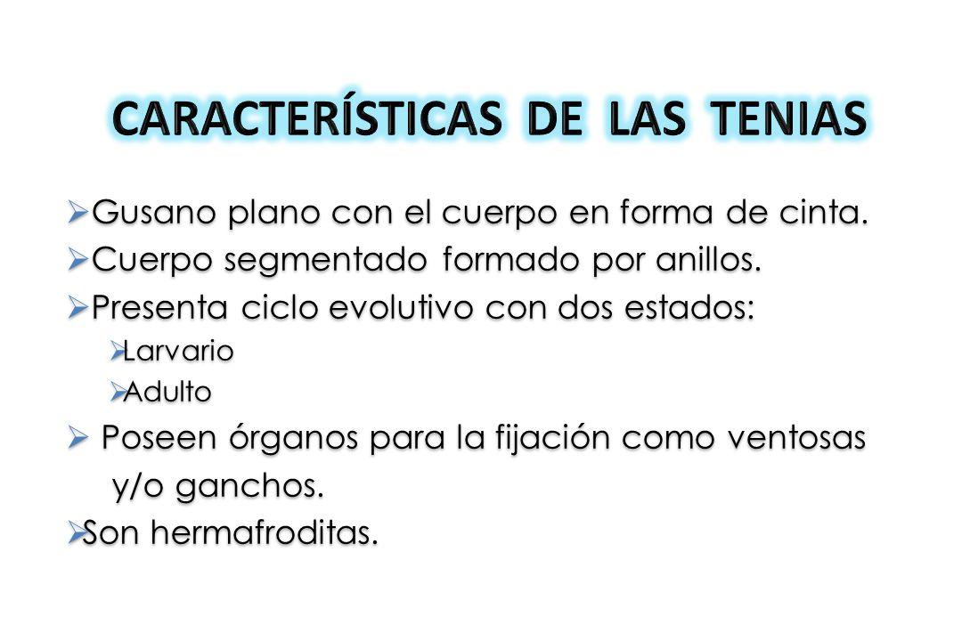 CARACTERÍSTICAS DE LAS TENIAS