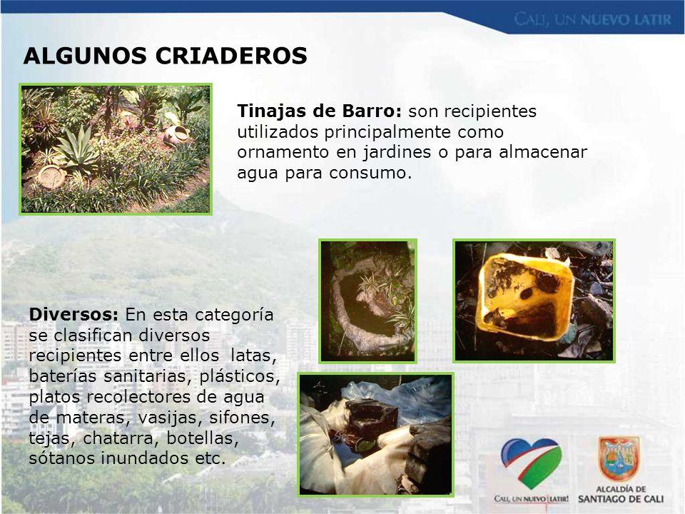 ALGUNOS CRIADEROS Tinajas de Barro: son recipientes utilizados principalmente como ornamento en jardines o para almacenar agua para consumo.