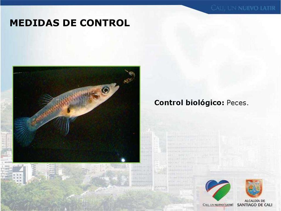 MEDIDAS DE CONTROL Control biológico: Peces.