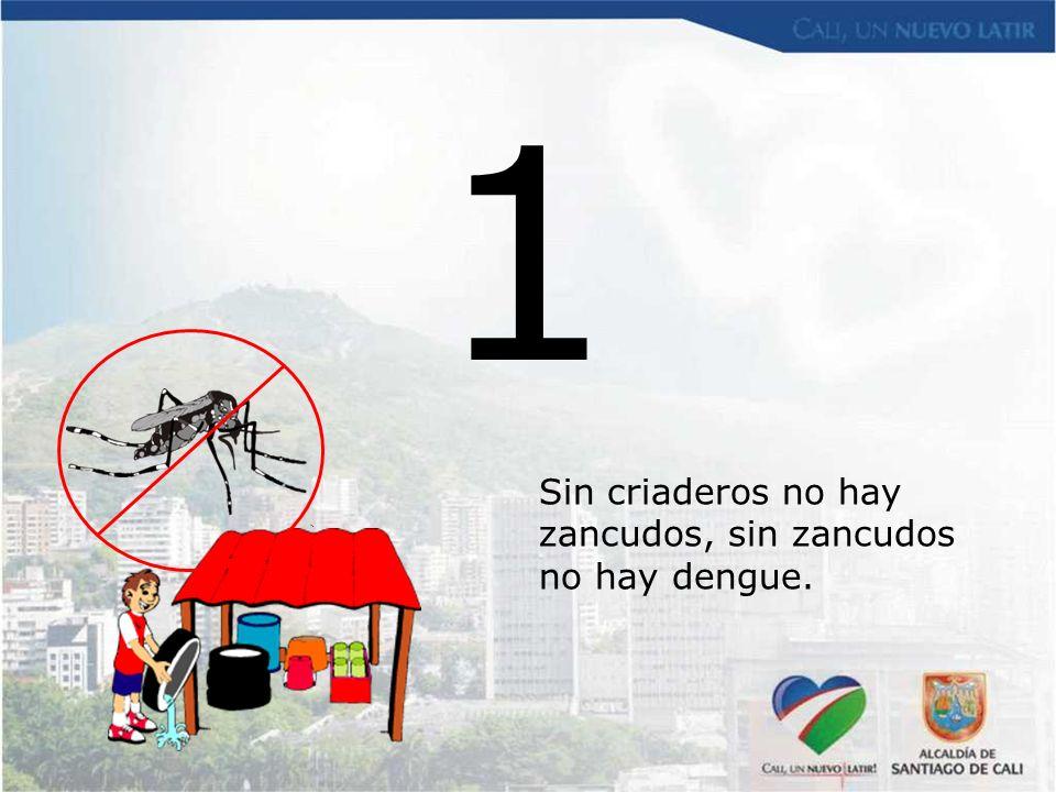 1 Sin criaderos no hay zancudos, sin zancudos no hay dengue.