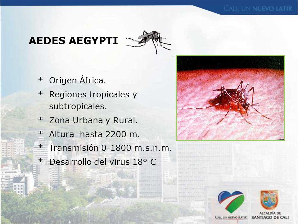 AEDES AEGYPTI * Origen África. * Regiones tropicales y subtropicales.
