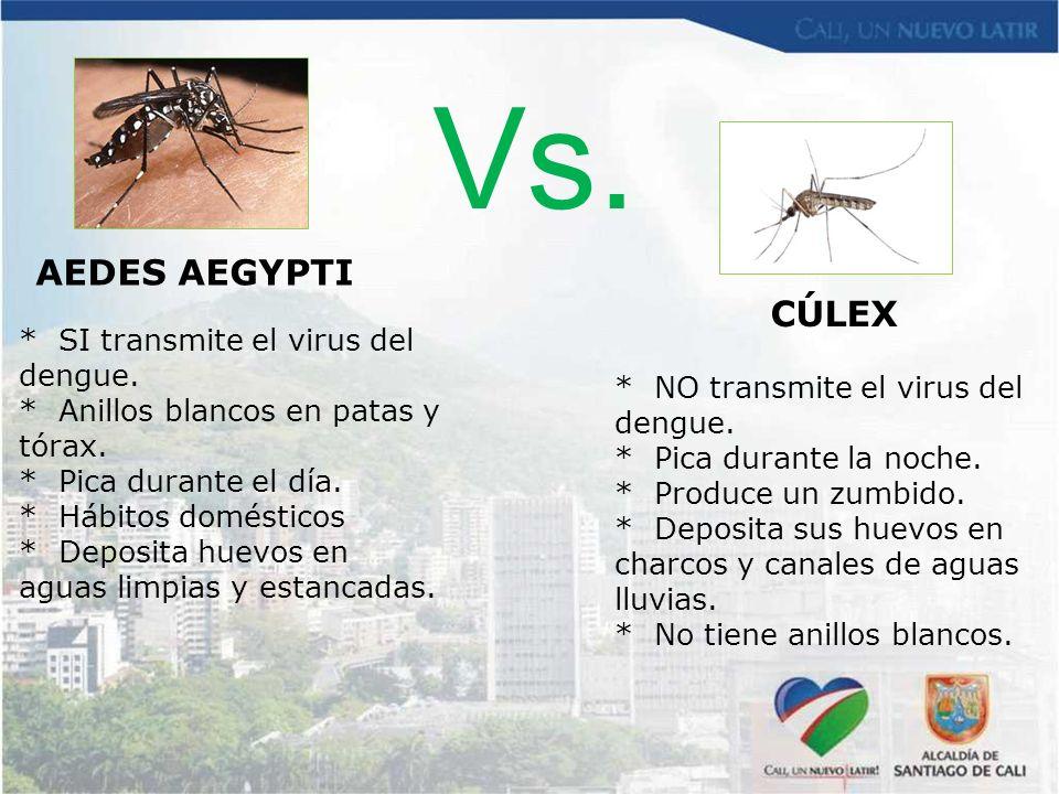 Vs. AEDES AEGYPTI CÚLEX * SI transmite el virus del dengue.