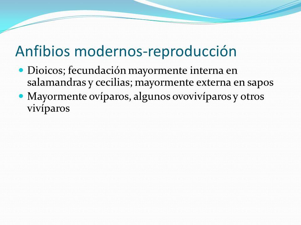 Anfibios modernos-reproducción