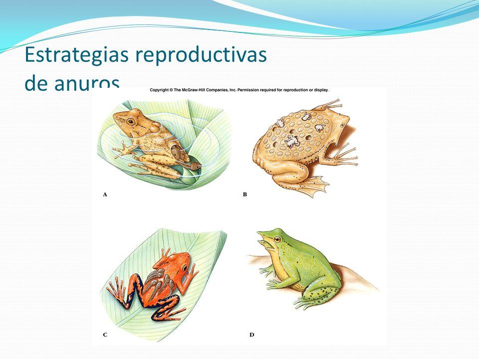 Estrategias reproductivas de anuros