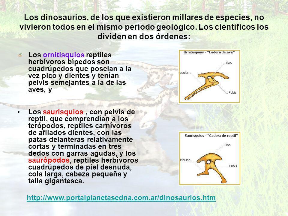 Los dinosaurios, de los que existieron millares de especies, no vivieron todos en el mismo período geológico. Los científicos los dividen en dos órdenes: