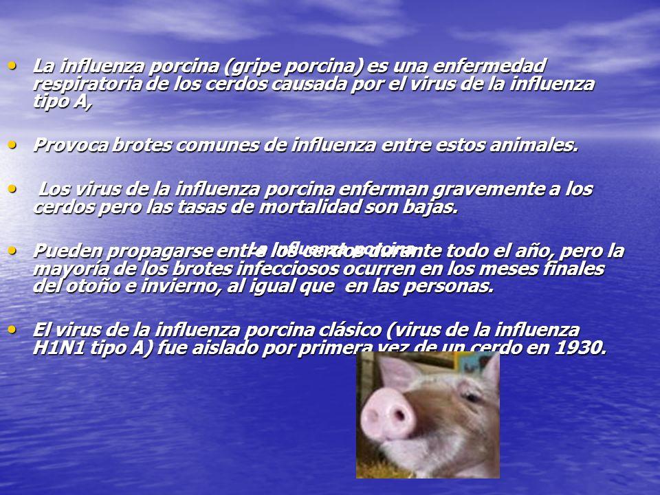 Provoca brotes comunes de influenza entre estos animales.