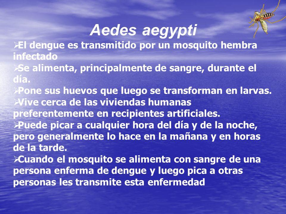 Aedes aegypti El dengue es transmitido por un mosquito hembra infectado. Se alimenta, principalmente de sangre, durante el día.