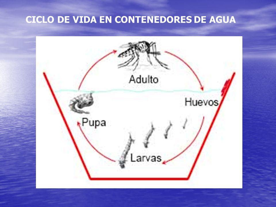 CICLO DE VIDA EN CONTENEDORES DE AGUA