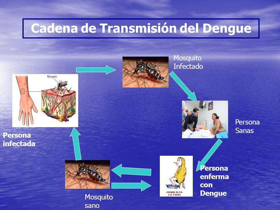 Cadena de Transmisión del Dengue