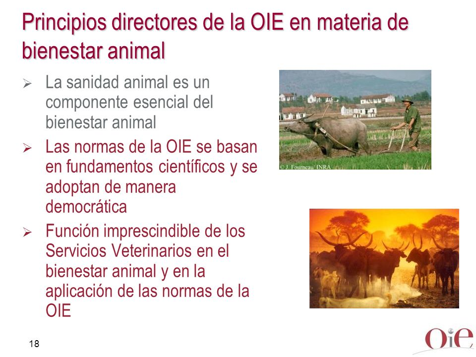 Principios directores de la OIE en materia de bienestar animal