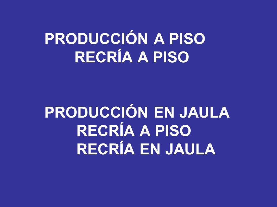 PRODUCCIÓN A PISO. RECRÍA A PISO. PRODUCCIÓN EN JAULA. RECRÍA A PISO