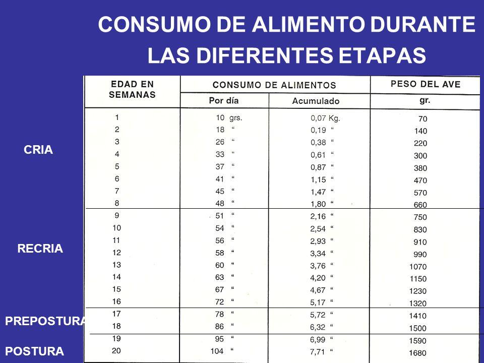 CONSUMO DE ALIMENTO DURANTE LAS DIFERENTES ETAPAS