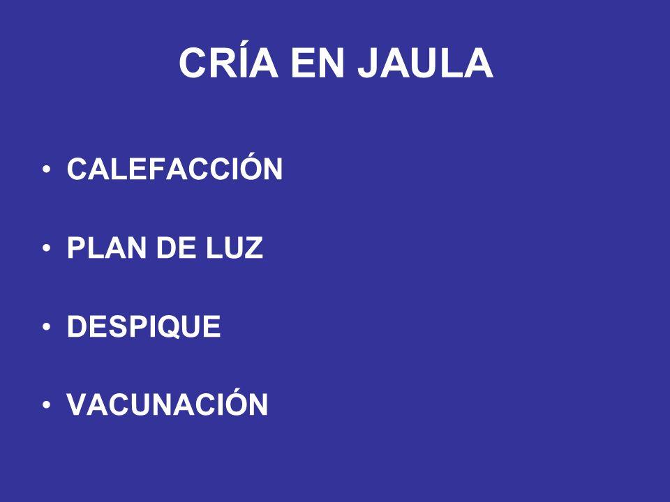 CRÍA EN JAULA CALEFACCIÓN PLAN DE LUZ DESPIQUE VACUNACIÓN