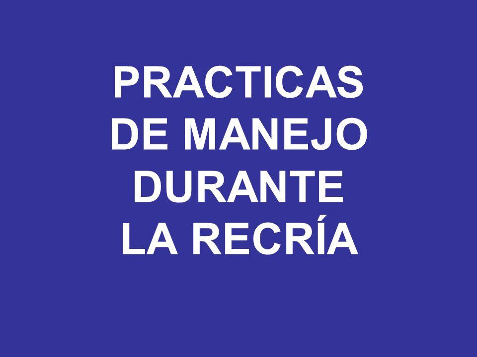 PRACTICAS DE MANEJO DURANTE LA RECRÍA