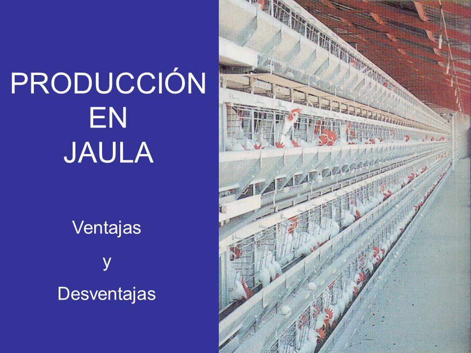 PRODUCCIÓN EN JAULA Ventajas y Desventajas