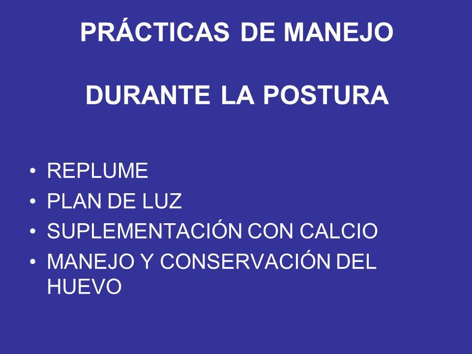 PRÁCTICAS DE MANEJO DURANTE LA POSTURA