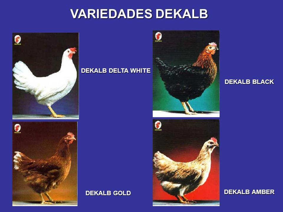 VARIEDADES DEKALB DEKALB DELTA WHITE DEKALB BLACK DEKALB AMBER