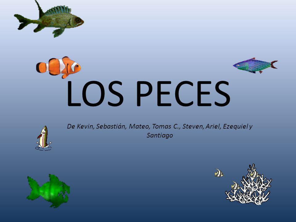 LOS PECES De Kevin, Sebastián, Mateo, Tomas C., Steven, Ariel, Ezequiel y Santiago