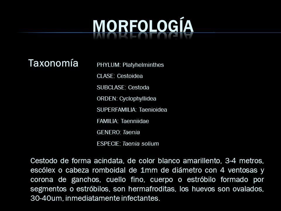 Morfología Taxonomía. PHYLUM: Platyhelminthes. CLASE: Cestoidea. SUBCLASE: Cestoda. ORDEN: Cyclophyllidea.