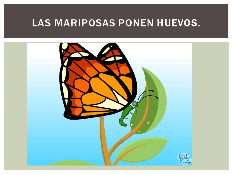 Las mariposas ponen huevos.