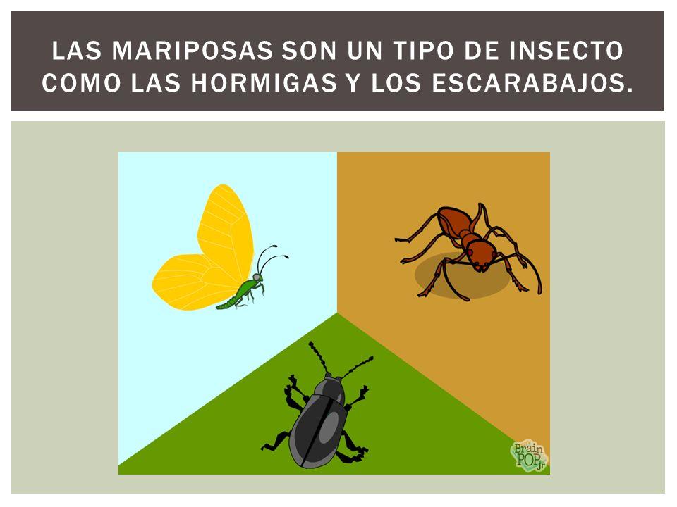 Las mariposas son un tipo de insecto como las hormigas y los escarabajos.